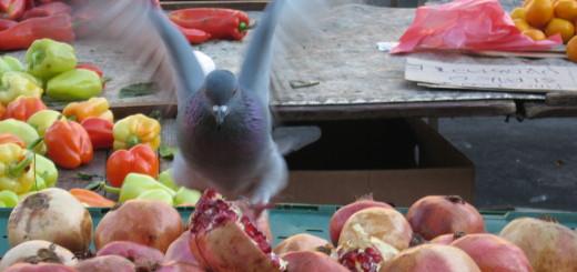 golub, golub jede, golub dolac, tržnica dolaz, šipak