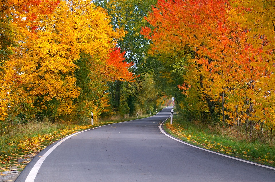 jesen, priroda, cesta