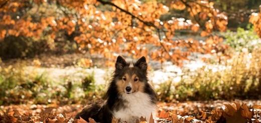 pas, pas u prirodi