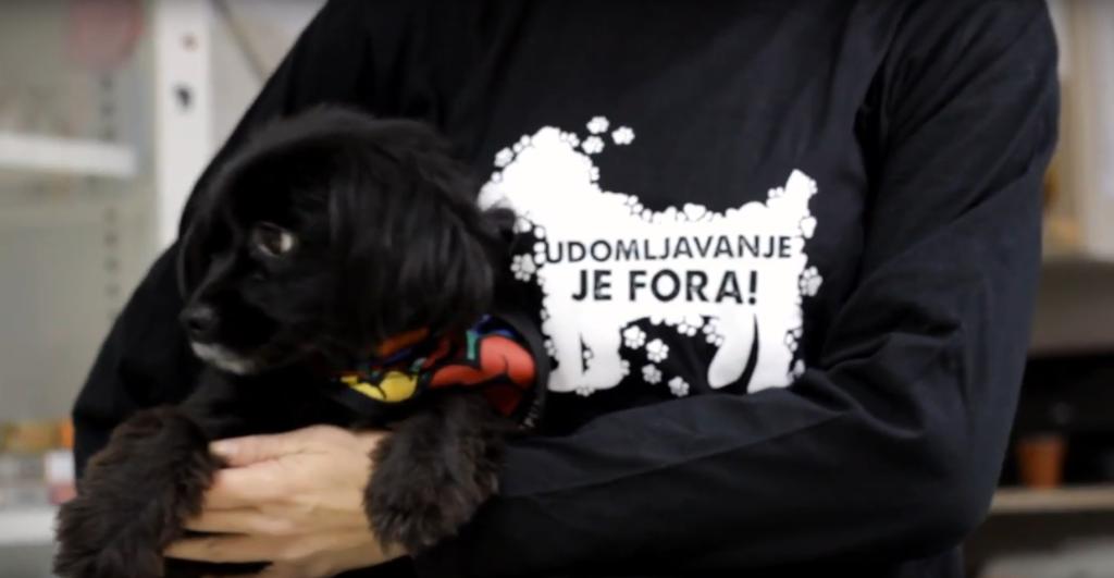 dumovec, azil za pse