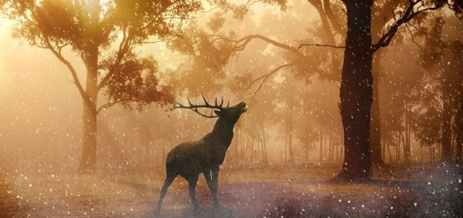 jelen, šuma, jesen