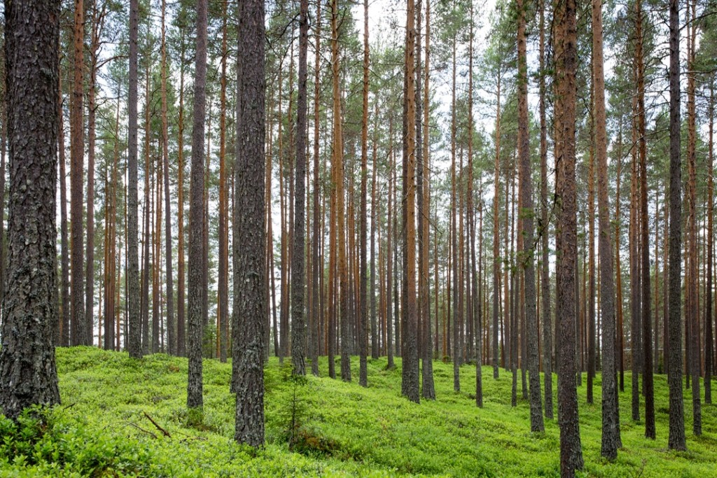 šuma, priroda