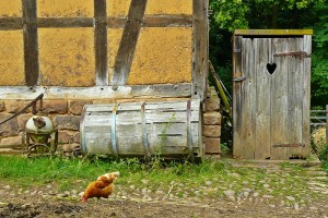 selo, kokoši