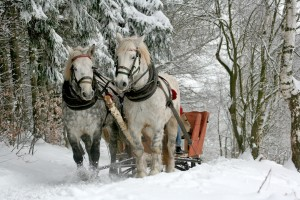 konji, zima, snježna idila