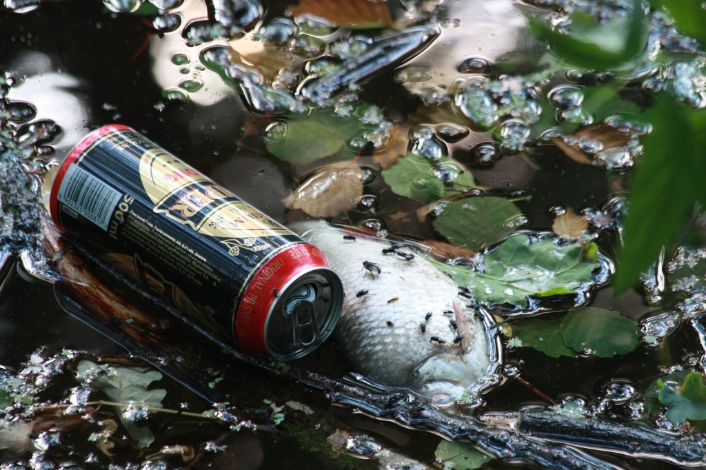 riblje konzerve, ribe