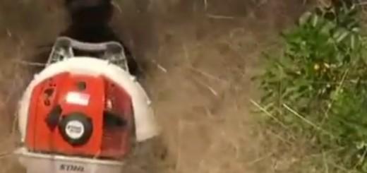 """VIDEO: ZATRPANI - Jeste li kad čuli za """"dlakavu paniku"""" koja je napala cijeli grad 1"""