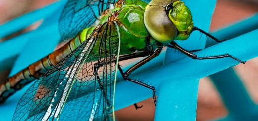 ISTRAŽUJEMO: Strašan Zika virus prenose komarci – trebaju li nam uopće? 1