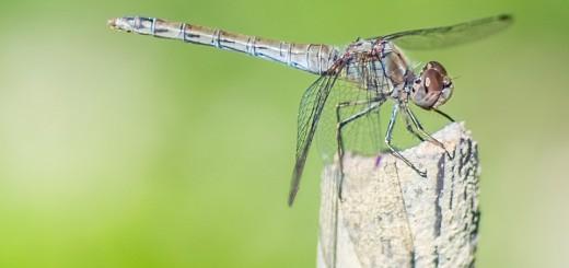 ISTRAŽUJEMO: Strašan Zika virus prenose komarci – trebaju li nam uopće? 2