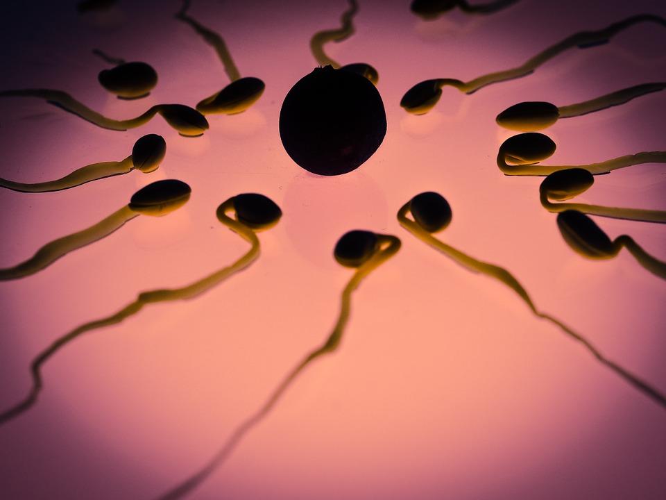 NOVO ETIČKO PITANJE: Što će svijet dobiti spermom iz laboratorija?