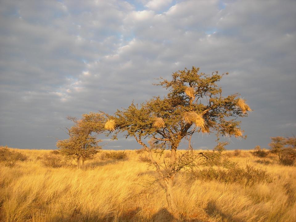 GLOBALNA KATASTROFA: Pola milijarde ljudi pati zbog nestašice vode, prijete li nam suše?
