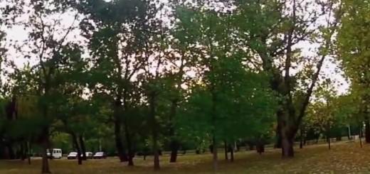 USUSRET UNIVERZIJADI: Petsto novih stabala na Jarunu - tko je sve sadio
