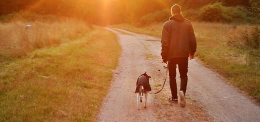 """NEOBIČNI POSLOVI I DOBRA ZARADA: Ne morate biti samo """"šetač pasa"""" - pogledajte što se sve nudi"""