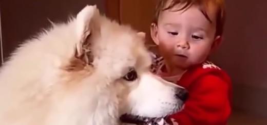 VIDEO: JEZIK LJUBAVI - Ima neka tajna veza djece i životinja - pogledajte