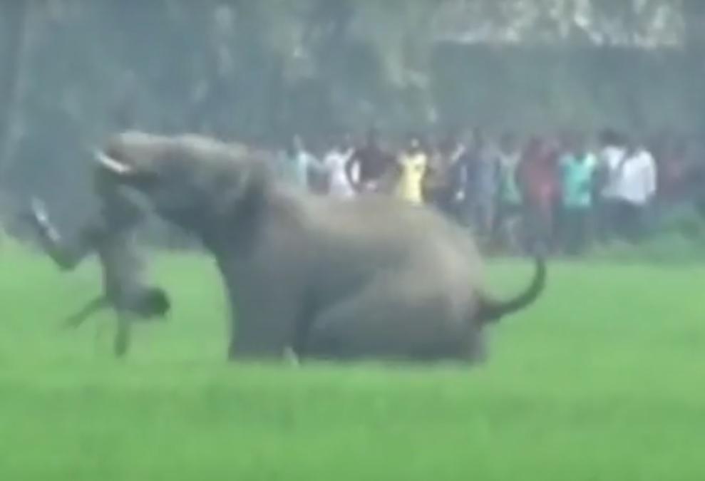 VIDEO: STRAVA U SELU - Pogledajte kako su se slonovi obračunavali s ljudima
