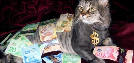 novac, mačak, ilustracija