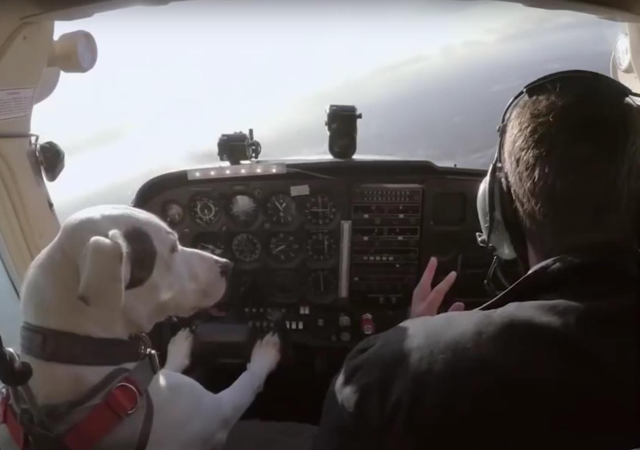 VIDEO: REVOLUCIJA - Pogledajte kako prelijepi psić vozi zrakoplov 1