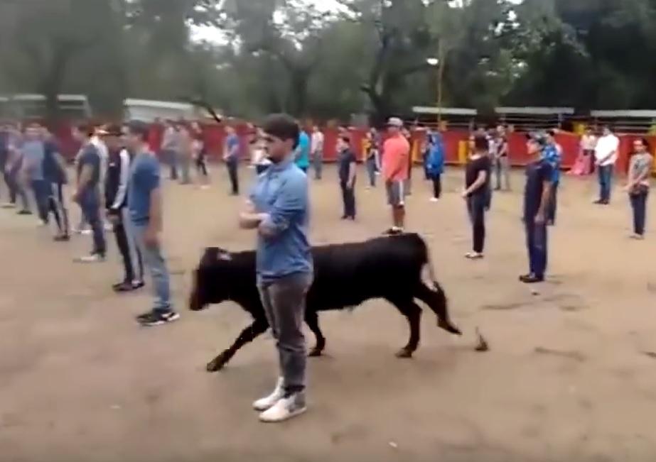 VIDEO: DRAMATIČAN EKSPERIMENT - Nastavnik pustio razjarenog bika na 40 učenika