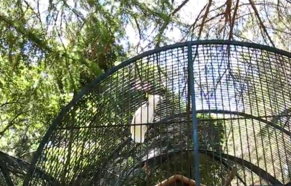 VIDEO: SUPER ZABAVLJAČ - Titov papagaj Koki i dalje psuje na Brijunima
