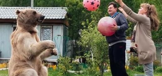 yuriy paneelenko, medvjed, svetlana 1