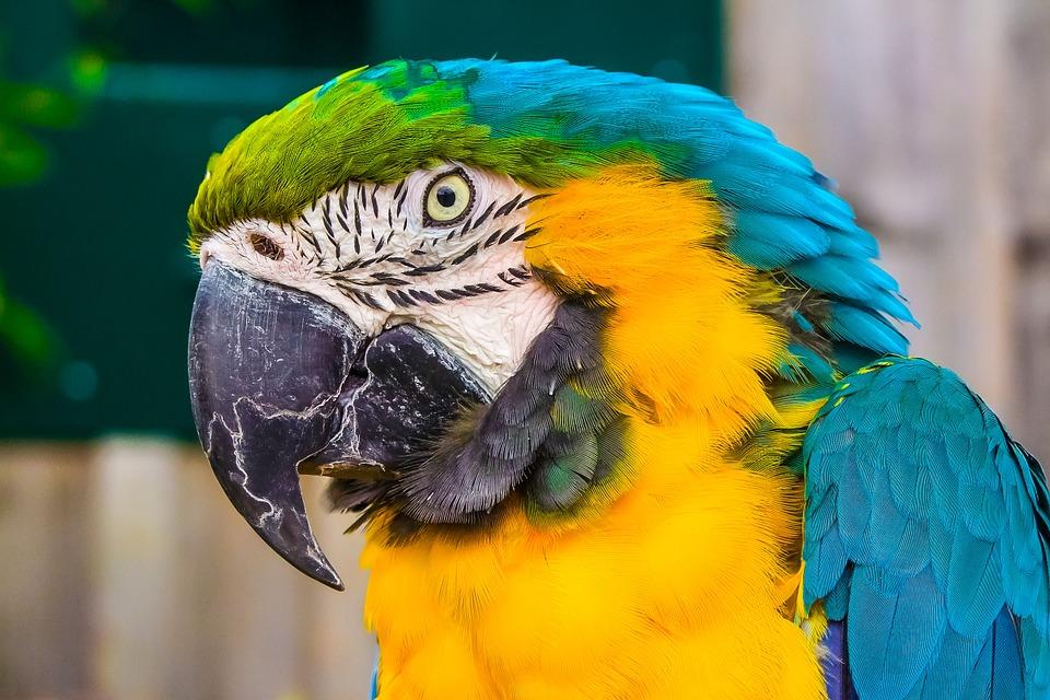 NEVJEROJATNO: Hoće li papagaj Bud koji je vidio ubojstvo biti svjedok na sudu?!