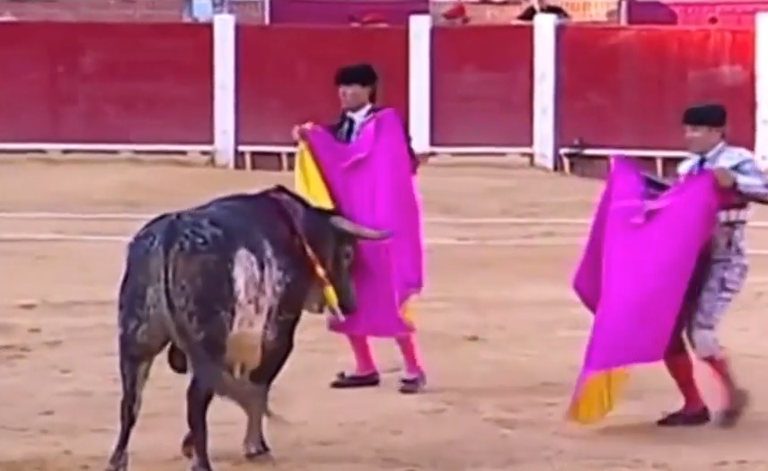 VIDEO: SMRT U ARENI - Toreador stradao u borbi s bikom teškim 500 kilograma