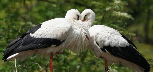 DAN JE RODA: Zašto su ljudi zaljubljeni u te ptice koje se drže čovjeka 1