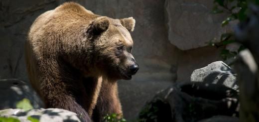 AKCIJA SPAŠAVANJA: Planinar bježao od medvjeda i slomio nogu - spasili ga HGSS-ovci