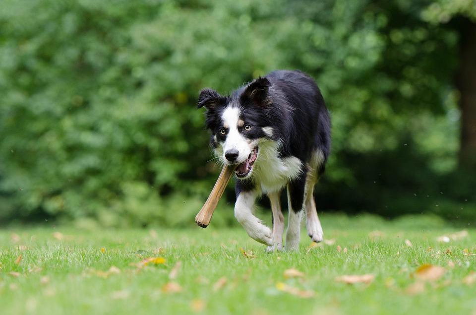 JOŠ ČISTIJI ZAGREB: Znat će se tko nije očistio za svojim psom - kazna do 4.000 kuna
