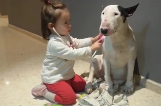 djevojčica, pas