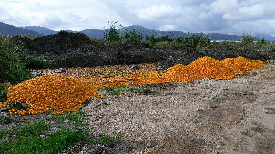 Bačene mandarine (Foto: Facebook)