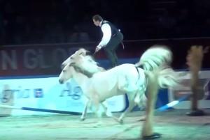 lorenzo, konji