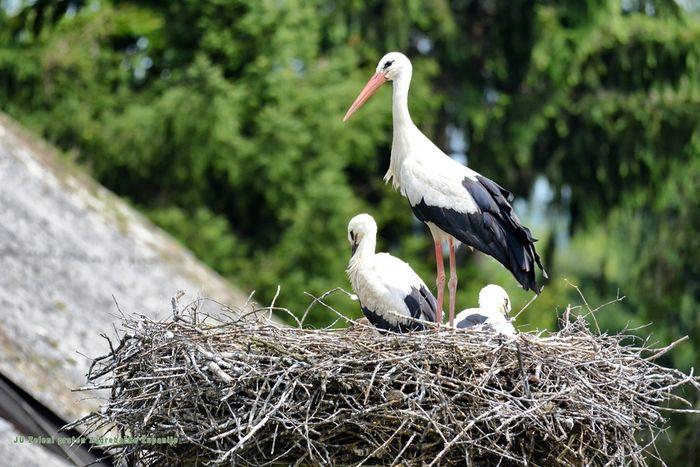 roda, bijela roda, mama i malene - malena