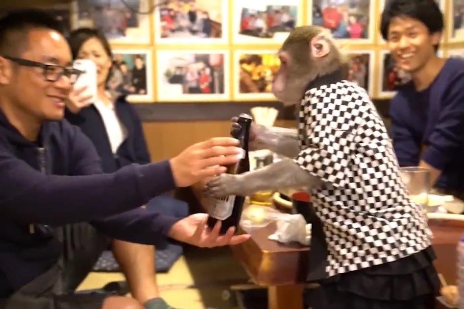 majmun konobar