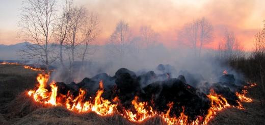 požar, vatra, polje