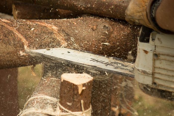 pila za drva