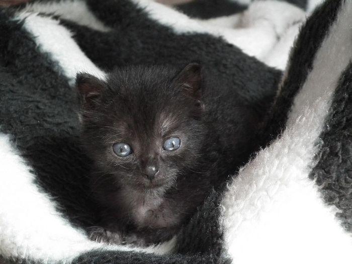 Crna maca.cim