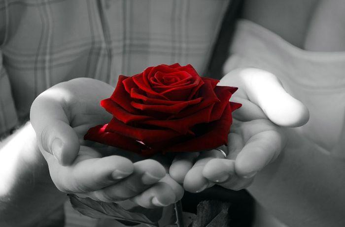 ruža, ruka