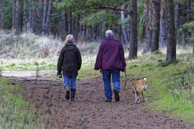 pas, šetnja, priroda