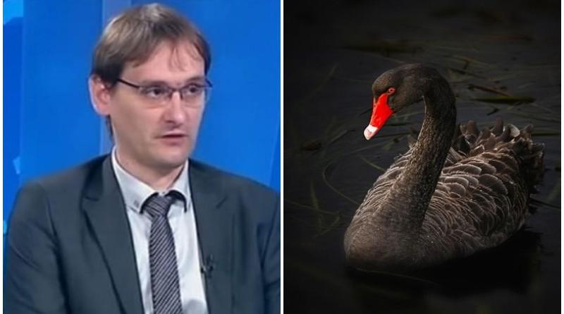 vučetić, crni labud