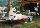 """TEMPERATURE MOGU BITI KOBNE: Što učiniti s kućnim ljubimcima na """"pasjoj"""" vrućini?"""