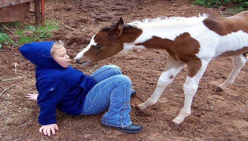 djevojčica, konj