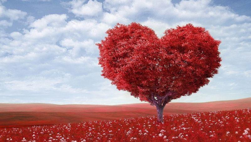 srce, stablo