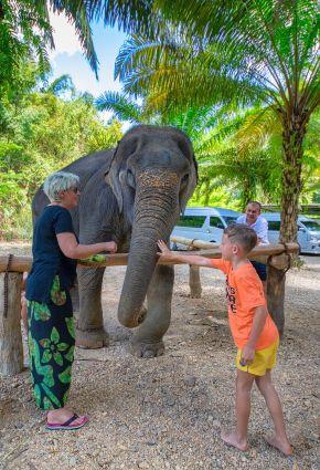 Bangkok igra sa slonom_