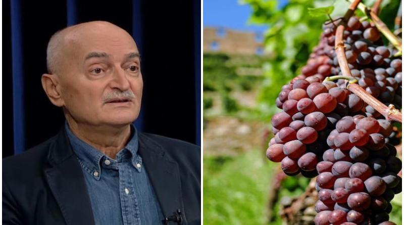 letica, vinograd